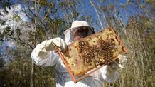 Fipronil é encontrado em 77% das amostras de colmeias com mortandade de abelhas no RS