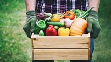 Índia estabelece novas exigências para importação de 24 produtos vegetais