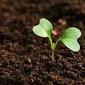 Entenda de que forma as plantas se defendem