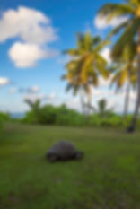 North island villa tortoise red.jpg