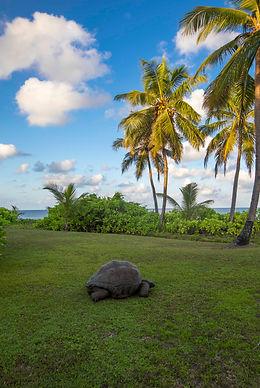 North island villa tortoise red.jpg