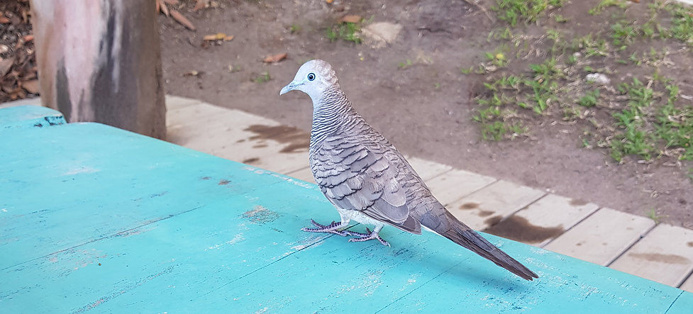 Bird Life on North Island