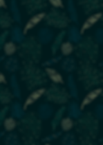 tropical nocturne-01.png