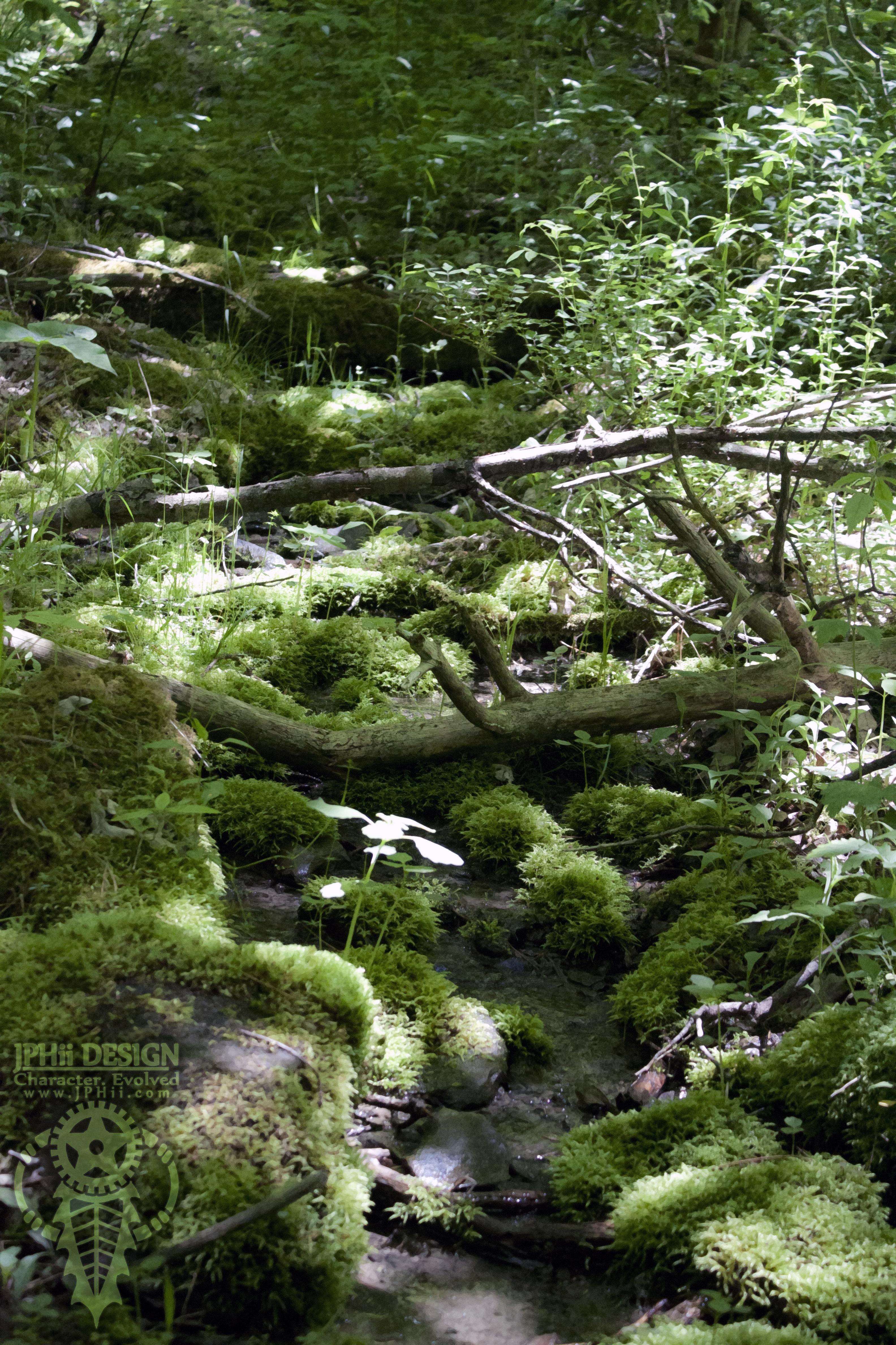 Stream in Morgan Hill