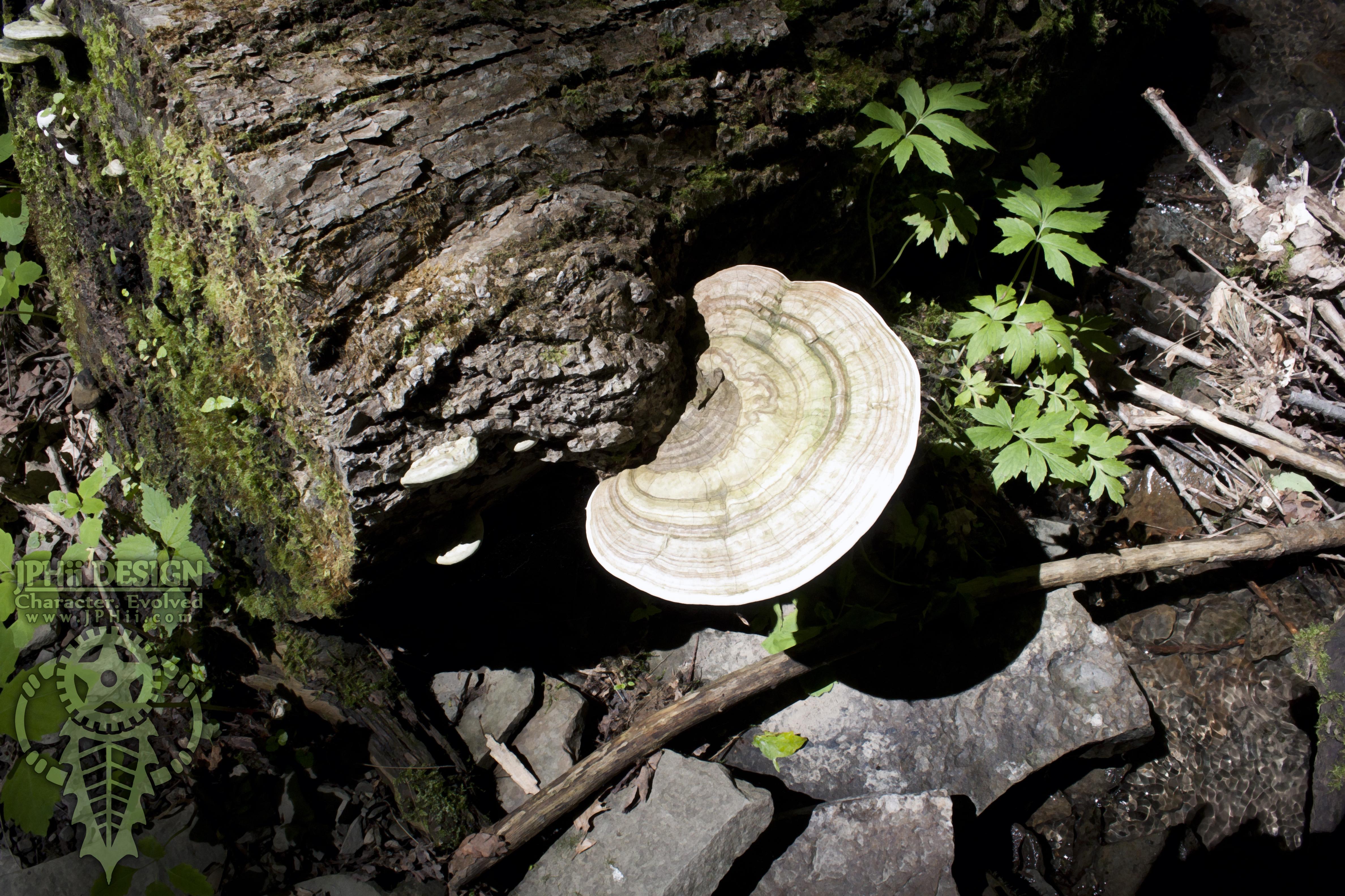 Mushroom on a Log