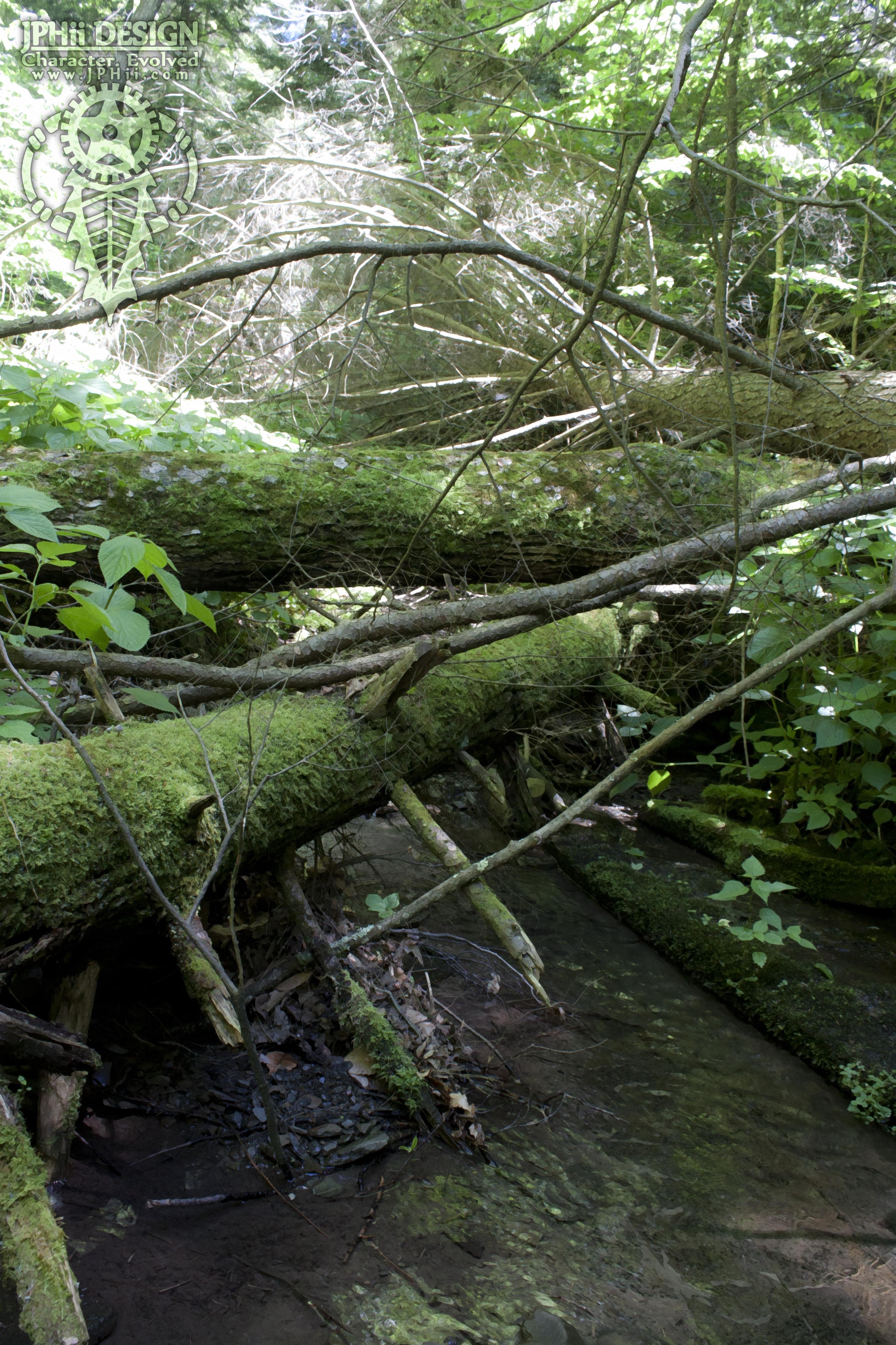 Trees Over  Stream