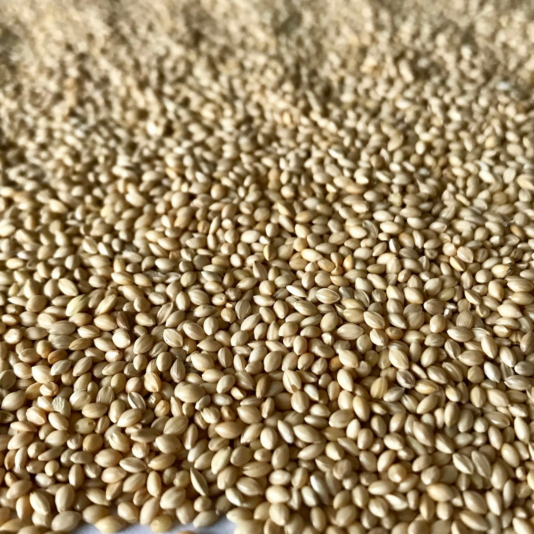 Moha - German millet