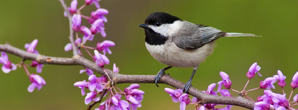 Springhaus Bird food