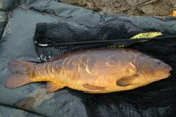 Peach mirror carp