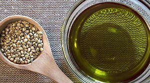 Hemp oil for carp fishing baits