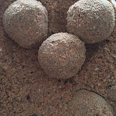 How to layer krill boilies using krill liquid.