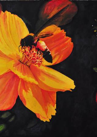 Marigold Wings