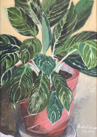 Dieffenbachia, a plant for all seasons