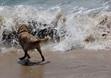 SALTY DOG PAWPARAZZI July 9, 2014