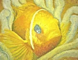 'Nemo' clown fish