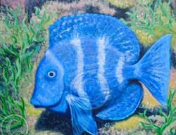 Commission Blue tropical fish