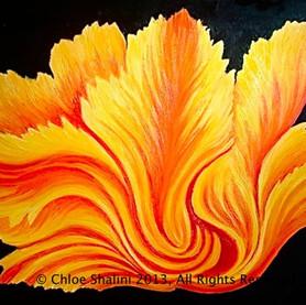 Flaming Tulip 2013
