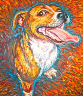 Staffy Dog