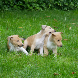 Bella, Jasper und Alice