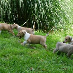Bella, Edward, Emmet, Esme und Jasper