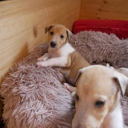 Jasper vorne und Bella hinten
