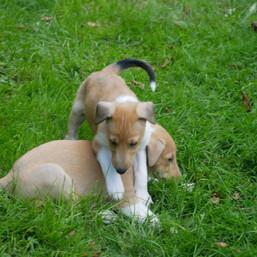 Bella und Emmet