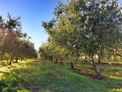 Order now TERRA ROSSA Extra Virgin Olive Oil 500ml
