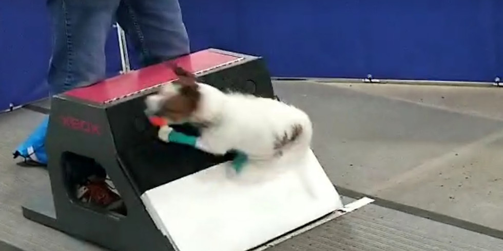 Advanced Flyball Foundations