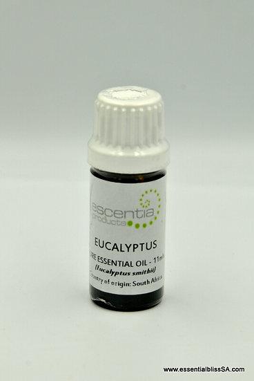 Eucalyptus Essential Oil 11ml (Smithii)