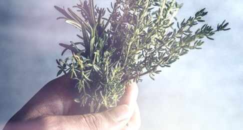 Rosemary, That's For Remembrance by Kate Meadows