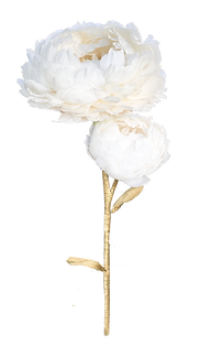 Giant-Peony-White-1_edited_edited.png