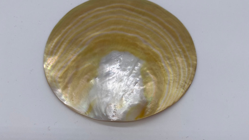 Mother of Pearl Shell 4 inches (golden lip)