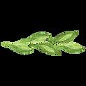 Les feuilles peintes
