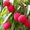 Organic Muzaffarpur litchi - Farm Fresh Centyle Mart Natural Grown