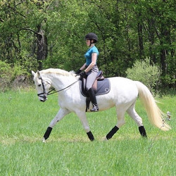 How are you handling equine isolation? L