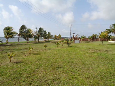 Malacate Beachfront area of 3.8 acre with grass and palm trees
