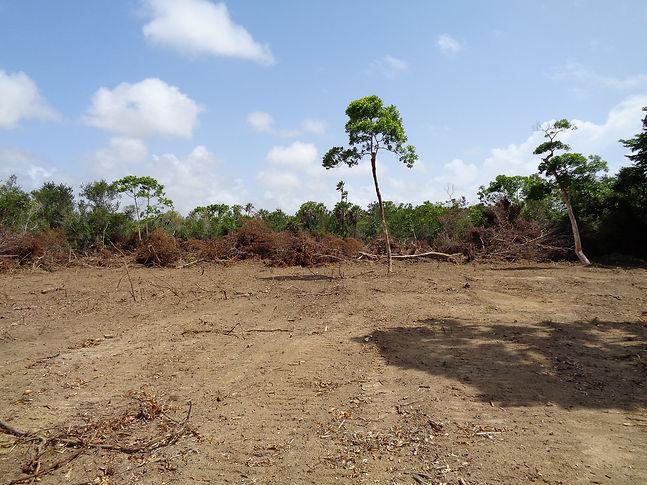 Belize Real Estate Lot 32 1.5 Acres