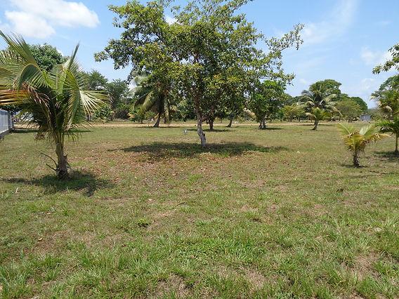 Belize Real Estate Lot #9