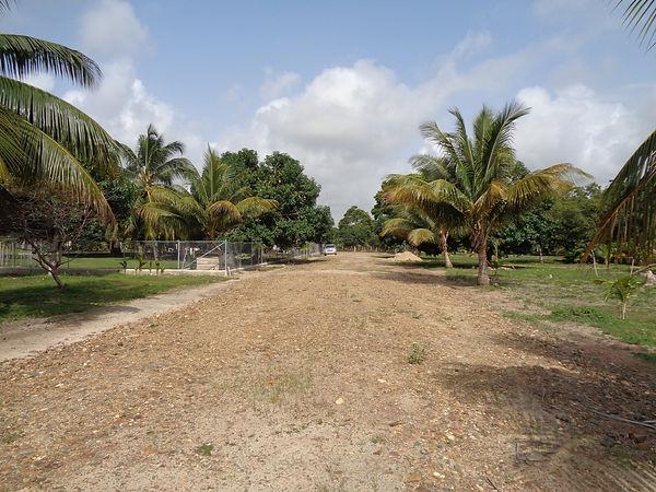Belize Real Estate Back Road of Lots 9, 10, 11