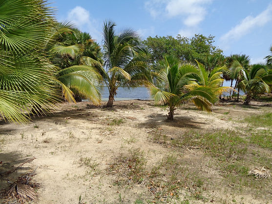 Belize Beachfront lot view from shoreline at lagoon