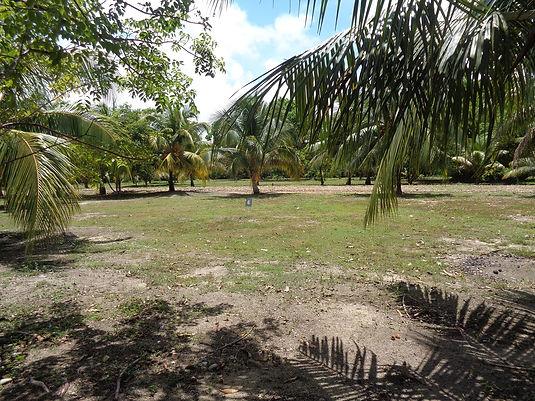 Belize Real Estate Lot 6