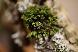 Pop Art Pflanze
