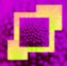 DSC00816T2bl002.jpg
