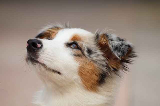 dog-4534463_640.jpg