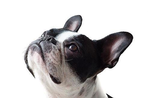 dog-4465690_640 (1).jpg