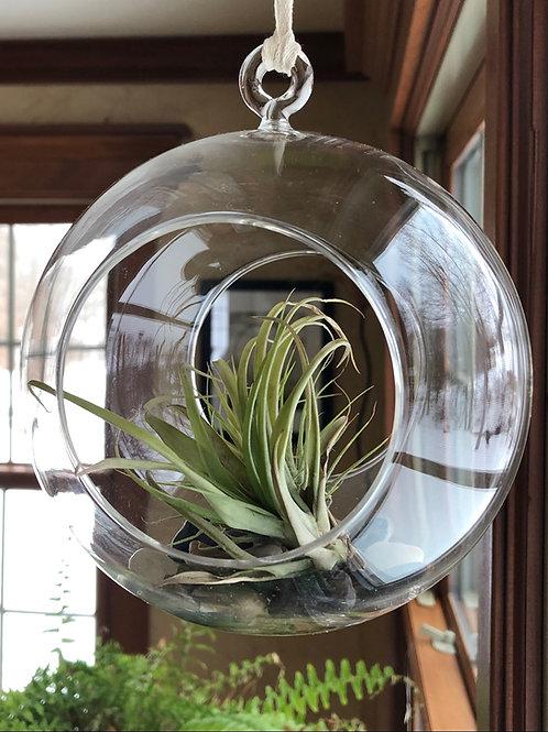 Glass Terrarium with Plant