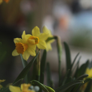 Mothering Sunday, 22nd March 2020