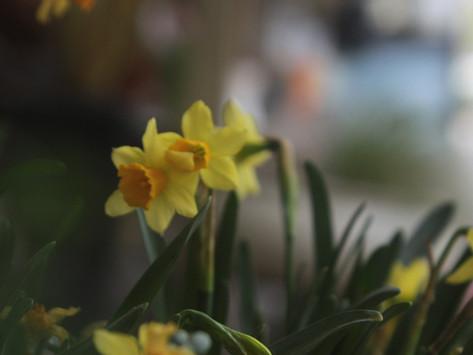 SHARING SECRETS: Spring Scene in the Garden
