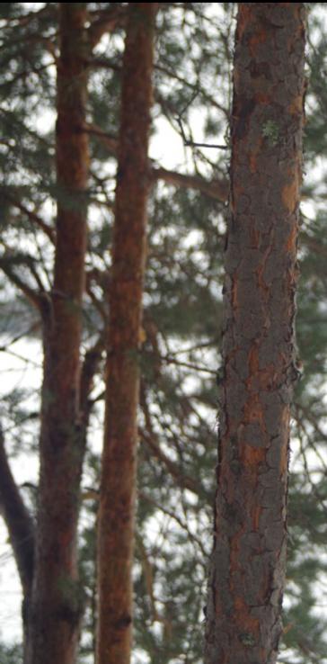 Лес-выделенка.PNG