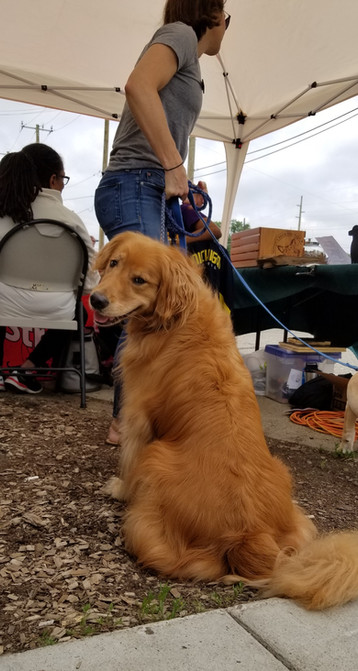 A golden boi helps man the registration table.